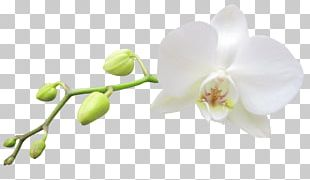 Moth Orchids White Haiku: An Anthology Of Japanese Poems PNG