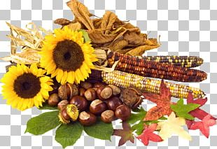 Conkers Autumn Leaf Color PNG