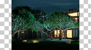 Landscape Lighting Landscaping Backyard Architecture PNG