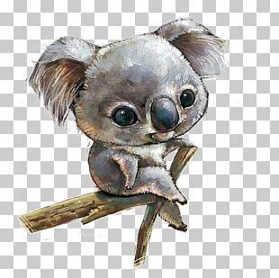 Koala Scalable Graphics Illustration PNG