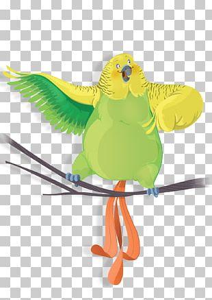 Bird Parrot Green Parakeet Macaw PNG