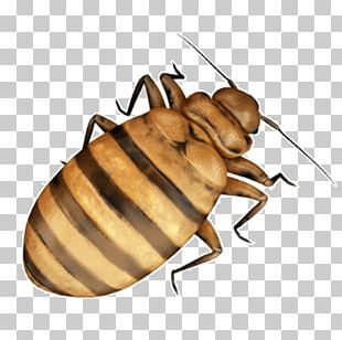 Cockroach Bed Bug Insect PNG