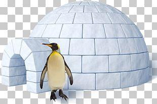 Igloo King Penguin PNG