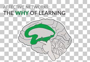 Universal Design For Learning Education Brain Teacher PNG