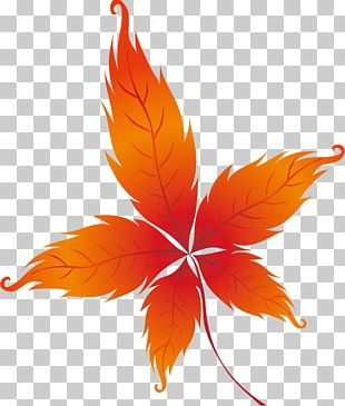 Autumn Leaves Drawing Leaf PNG