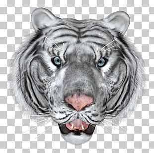 Bengal Tiger Cat Lion White Tiger Animal PNG