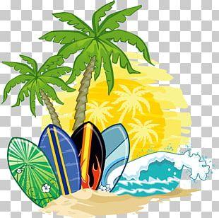 Coconut Water Arecaceae PNG