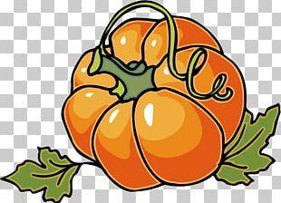 Cucurbita Pepo Pumpkin Pie Autumn PNG
