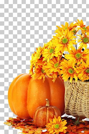 Charlie Brown Pumpkin Facebook Autumn Eggnog PNG