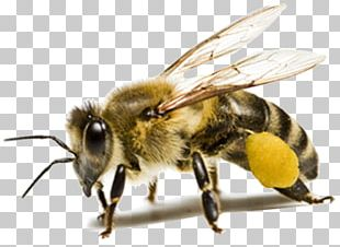 Honey Bee Insect Ant PNG