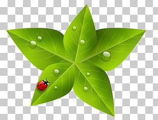 Leaf Green Nature PNG