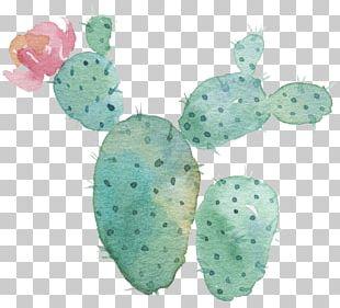 Cactaceae Succulent Plant Flower Watercolor Painting Astrophytum Myriostigma PNG