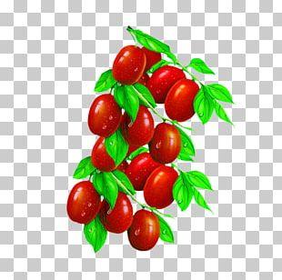 Jujube Tea Barbados Cherry Food PNG