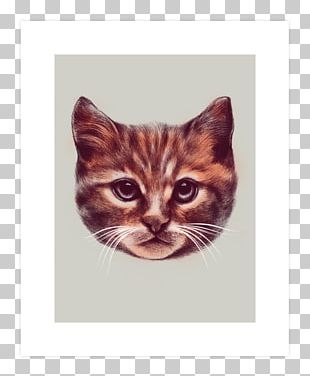 Kitten Persian Cat T-shirt Cuteness PNG
