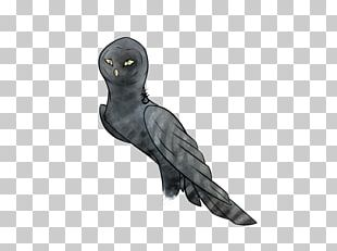 Bird Parrot Beak Feather Wing PNG