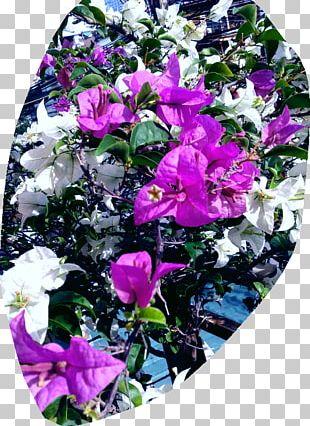 Cut Flowers Floral Design Rose Family Petal PNG