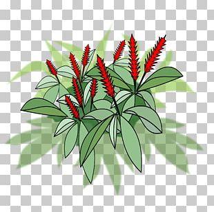Flowering Pot Plants Red Ginger Flowering Plant PNG