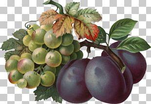 Common Grape Vine Wine Berry Seedless Fruit PNG