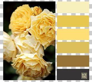 Garden Roses Cut Flowers Floral Design PNG
