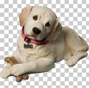 Labrador Retriever Puppy Standard Schnauzer Golden Retriever Miniature Pinscher PNG