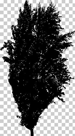 Tree Silhouette Spruce Woody Plant Fir PNG