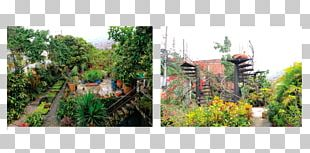 Botanical Garden Tree Rainforest Recreation PNG