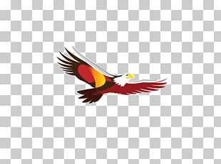 Beer Anheuser-Busch InBev Anheuser-Busch InBev SABMiller PNG