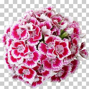 Cut Flowers Carnation PNG