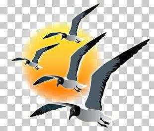 Water Bird Fauna Beak PNG
