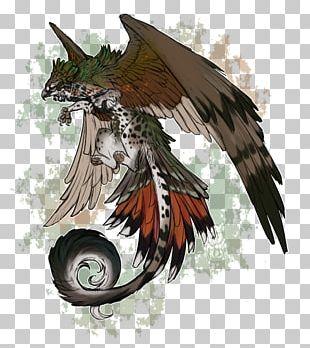 Bird Of Prey Beak Illustration Feather PNG