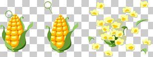 Popcorn Corn On The Cob Maize Vegetarian Cuisine Sweet Corn PNG