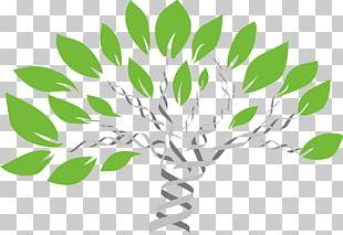 Genealogy Genealogical DNA Test Family Tree DNA PNG