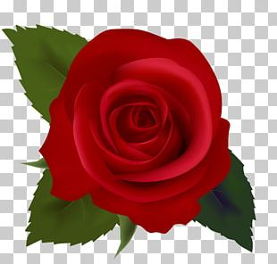 Black Rose Free Content PNG
