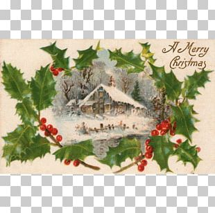 Holly Aquifoliales Christmas Ornament Leaf PNG