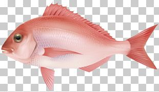 Northern Red Snapper Fish Products Fish As Food Marine Biology Ocean PNG