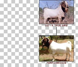 Boer Goat Dog Breed Sheep Cattle PNG