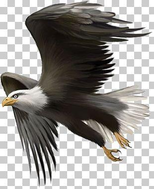 Bald Eagle Bird Golden Eagle PNG