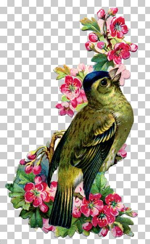 Bird Swallow Vintage Clothing Flower Feather PNG