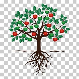 Fruit Tree Drawing Apple Root PNG