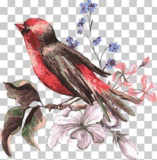 Bird Flower Euclidean Illustration PNG