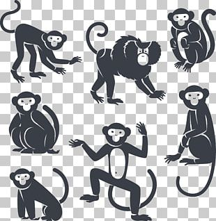 White Monkey Png Images White Monkey Clipart Free Download