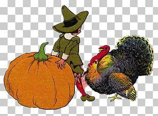 Pumpkin Calabaza Illustration PNG
