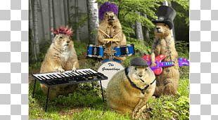 Punxsutawney Phil Groundhog Day Birthday PNG