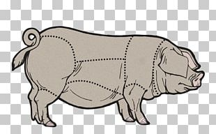 Domestic Pig Cattle Cut Of Pork PNG
