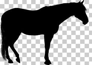 Arabian Horse Silhouette PNG