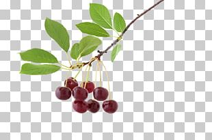 Chokeberry Tree Nut Allergy Gluten-free Diet Paleolithic Diet PNG