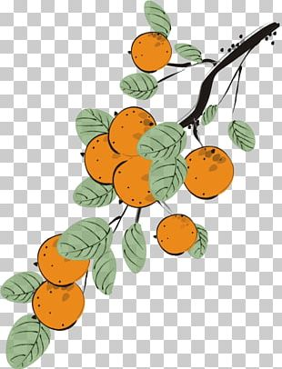 Japanese Persimmon Auglis Euclidean PNG