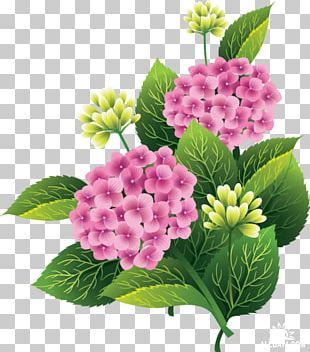 Cut Flowers Portable Network Graphics PNG