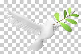 Bird Of Prey Beak Feather Wing PNG