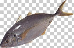 Milkfish Salmon Oily Fish Sole Fish Products PNG